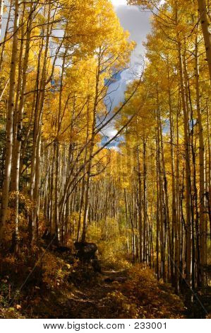 Follow The Golden Aspen Road