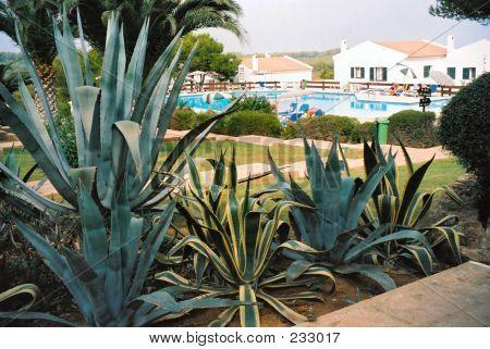 Cacti Varieties
