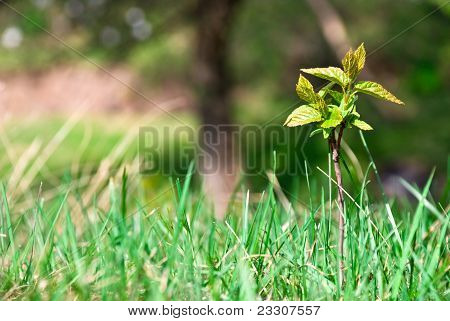 Small Young Tree Growing In The Forest