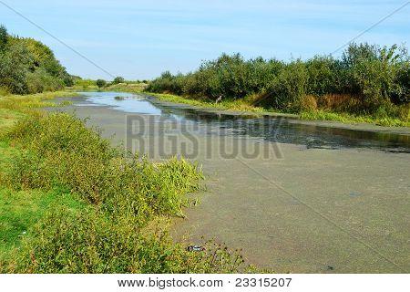 Green field near the river