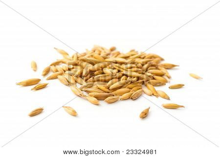 Heap Of Oat Grains