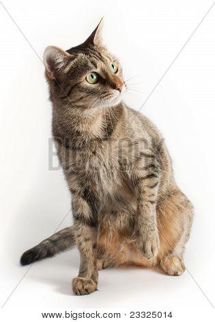 Cat In Full Size
