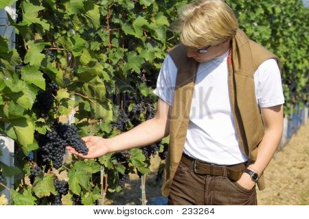 Checking The Grapes