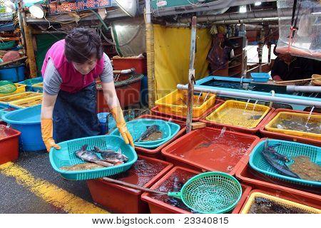 DAEPOHANG FISH MARKET - Juni 06: Ein Fischhändler wählt frische Meeresfrüchte für Kunden, die in ihrem Stall auf Ju