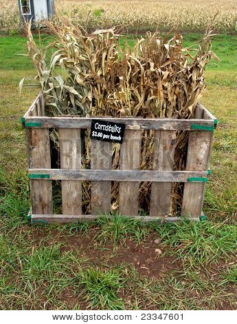 Cornstalks For Sale