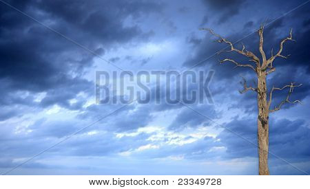 Stormy Sky With A Single Tree