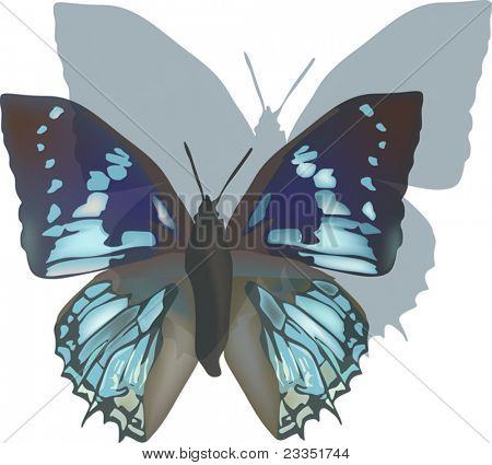 illustration with blue butterfly and shadow isolated on white background