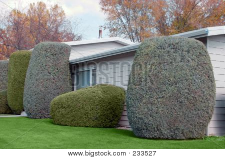Neatly Trimmed Shrubs