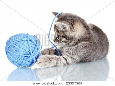 Funny gray kitten and ball of thread isolated on white