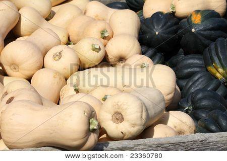 Butternut & Acorn Squash