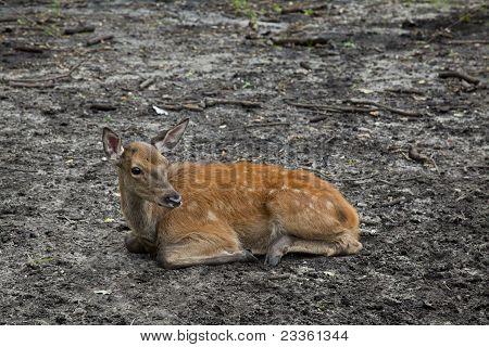 Sad Baby Deer