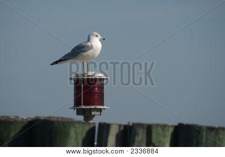 Seagull On Marker Light