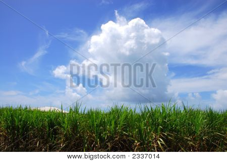 Clouds & Sugarcane