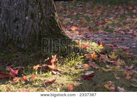 Colorful Fallen Leaves And A Tree Trunk
