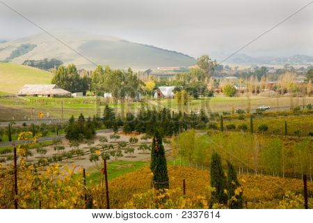 Carneros Wine Region 2