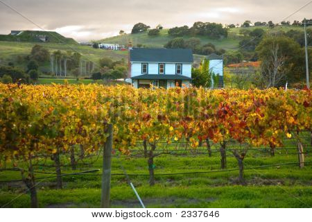 Sunset At A Home In A Snoma Vineyard