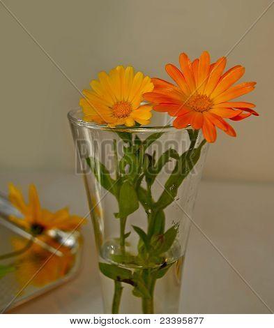 Calendula in vase still life