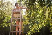 stock photo of apple orchard  - Young woman up on a ladder picking apples from an apple tree on a lovely sunny summer day  - JPG