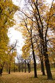 Autumn Colors In Forest