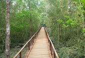 foto of sundarbans  - Wooden bridge through muddy Sundarban forest of Bangladesh - JPG