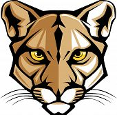 stock photo of cougar  - Graphic Vector Mascot Image of a Mountain Lion Head - JPG