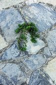 Green Plant Germinate On An Old Stone Wall. Concept Of Overcoming Obstacles And Willpower. poster