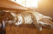 lazy tabby cat sleep on a chair at home poster