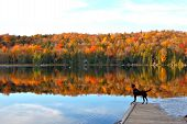 image of dock a pond  - Dog stands on dock and looks upon