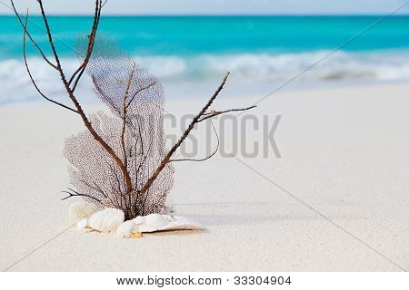 Beach And Sea Concept