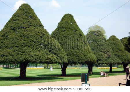 Examples of Cone Shaped Objects http://www.bigstockphoto.com/image-3330550/stock-photo-cone-shaped-trees