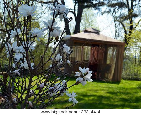 Magnolia Spring Flower. Bower Mosquito Protect Net