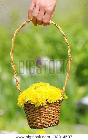 Hand Holding Basket With Yellow Dandelion Flowers