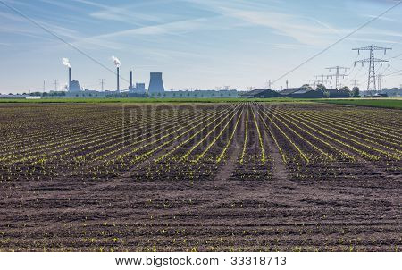 Cultivation Of Silage Maize In Front Of A Power Plant