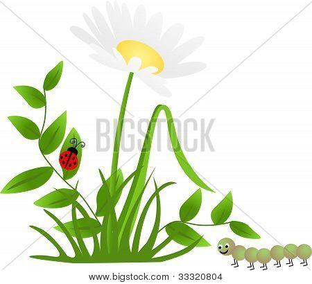 Flor Mariquita ciempiés