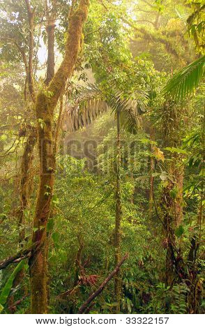 Dense Rainforest