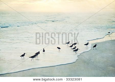 Textured Tropical Beach Sunset with Birds in Ocean