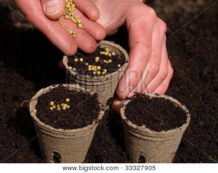 Pots With Ground, Closeup