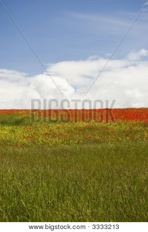 English Countryside In Summer