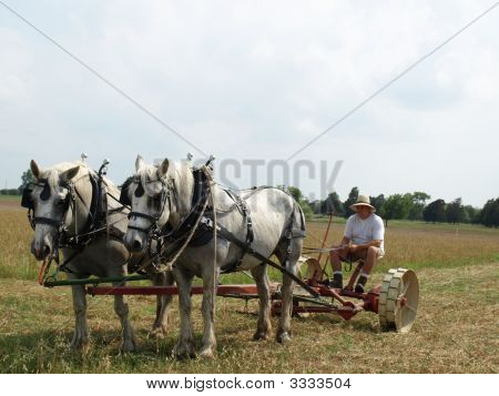 Man Ploughing The Field