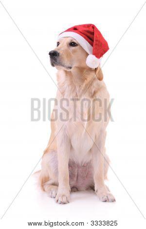 Un perro de vacaciones