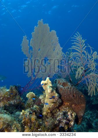 Sea Fan And Blue Fish