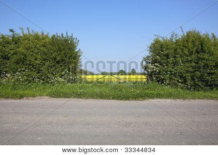 Summer Roadside Background