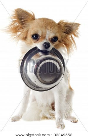 Puppy Chihuahua And Food Bowl