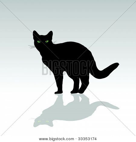 Cat With Green Eye Vector Illustration