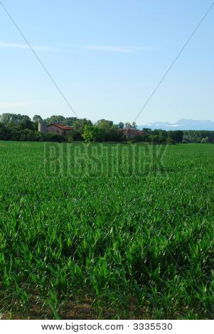Corn Field And Farm
