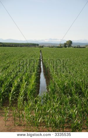 Corn Field Ditch
