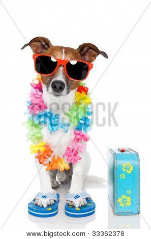 Tourist Dog With Hawaiian  Lei And A Bag