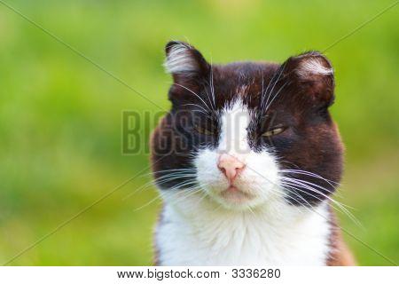 Experienced Cat