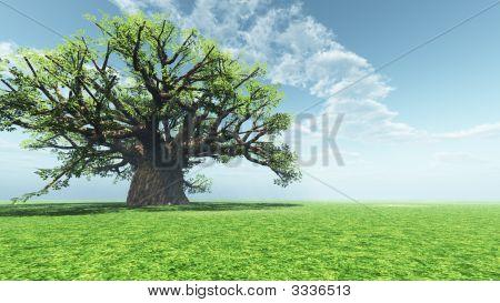 Impresionante Baobab