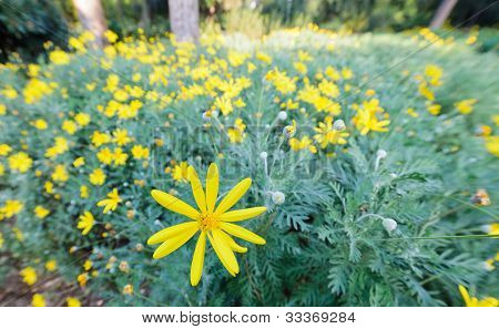 Yellow flower bush